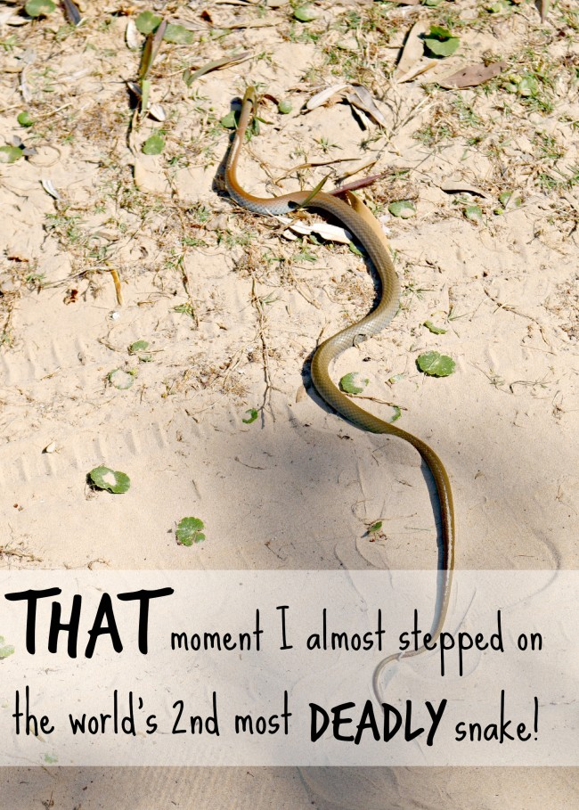 almost stepped on an eastern brown snake